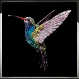 Жемчужная колибри