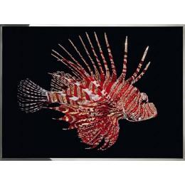 Рубиновая рыба-зебра